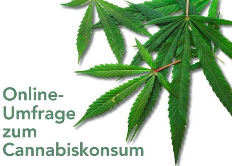 Online- Umfrage zum Cannabiskonsum