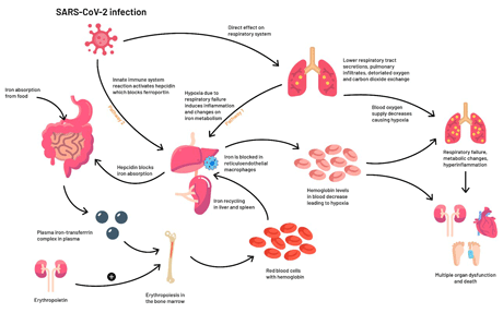 iron and anemia biomarkers graphic illustration